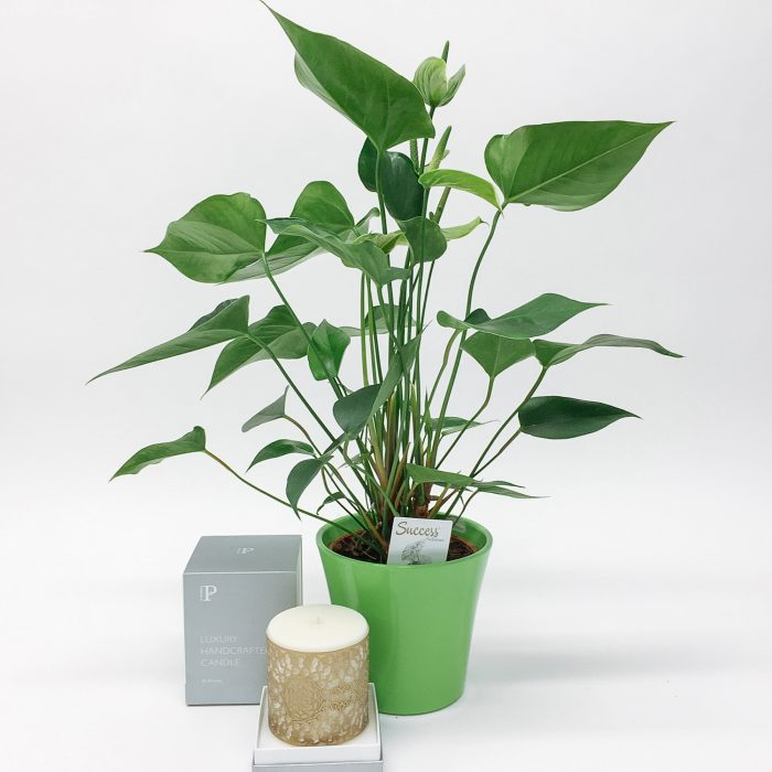 Floom Dw Floral Design Plant Candle Set 1