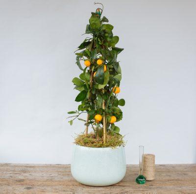 Floom Fresh Flower Co Citrus Plant 2