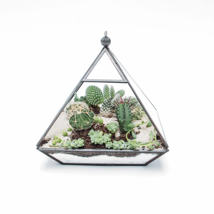 Floom Tame Pansy Terrarium Pyramid 1