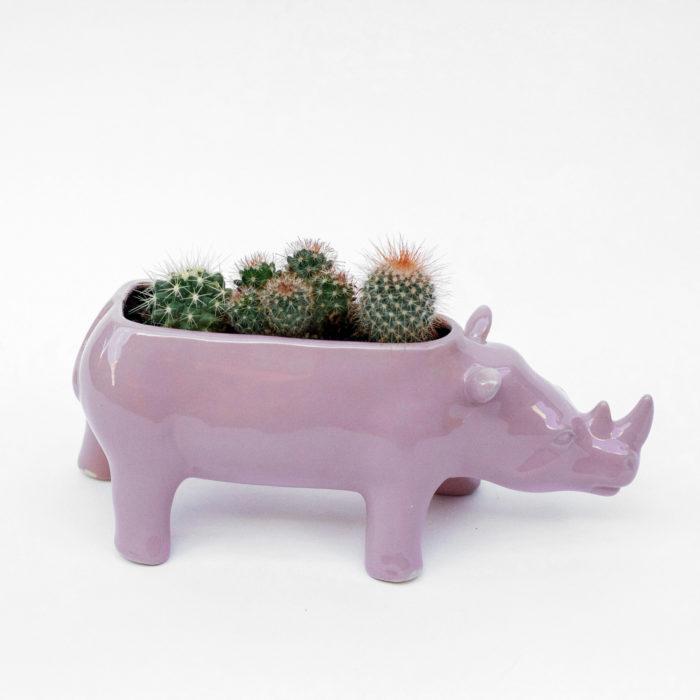 Floom Posy Wild Rhythm The Rhino 1