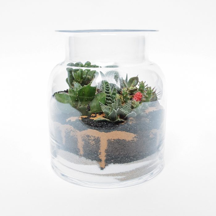 Floom Tame Pansy Terrarium Jar 1