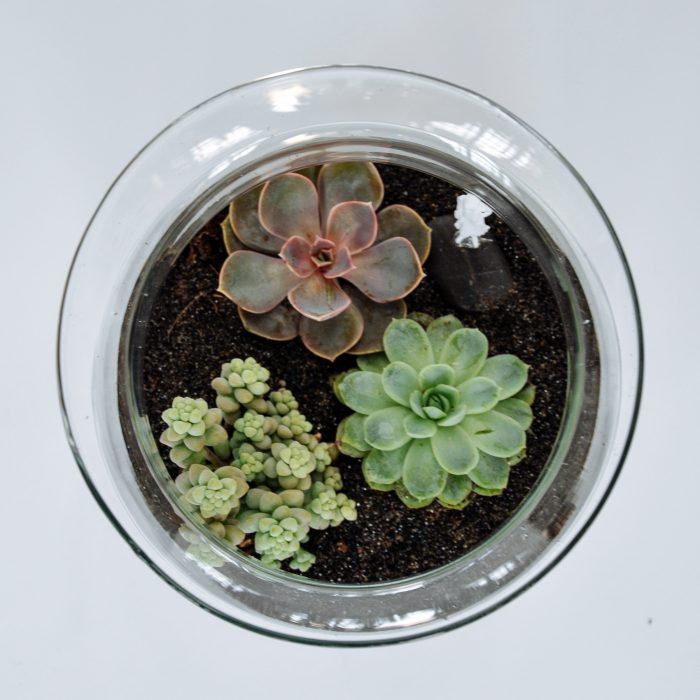Floom Little Botanica Succulent Jar 2