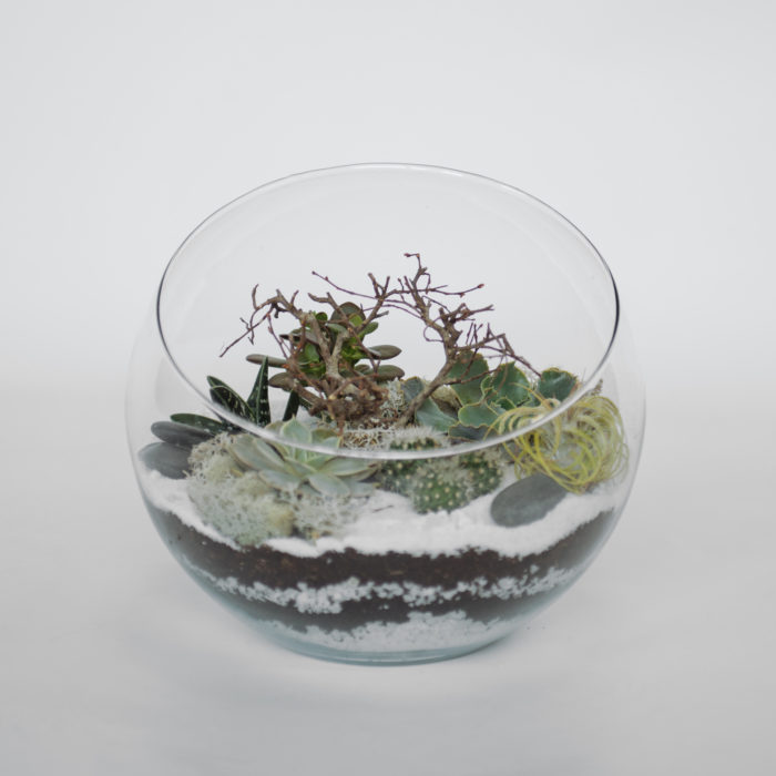 Floom Your London Florist Terrarium 1