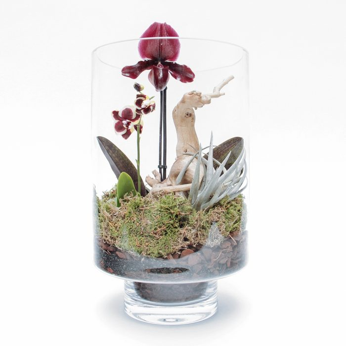 Floom Tame Pansy Orchid Vase 1