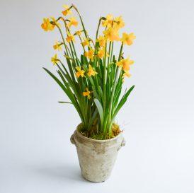 Floom Flora Nora The Ryan Gosling 1