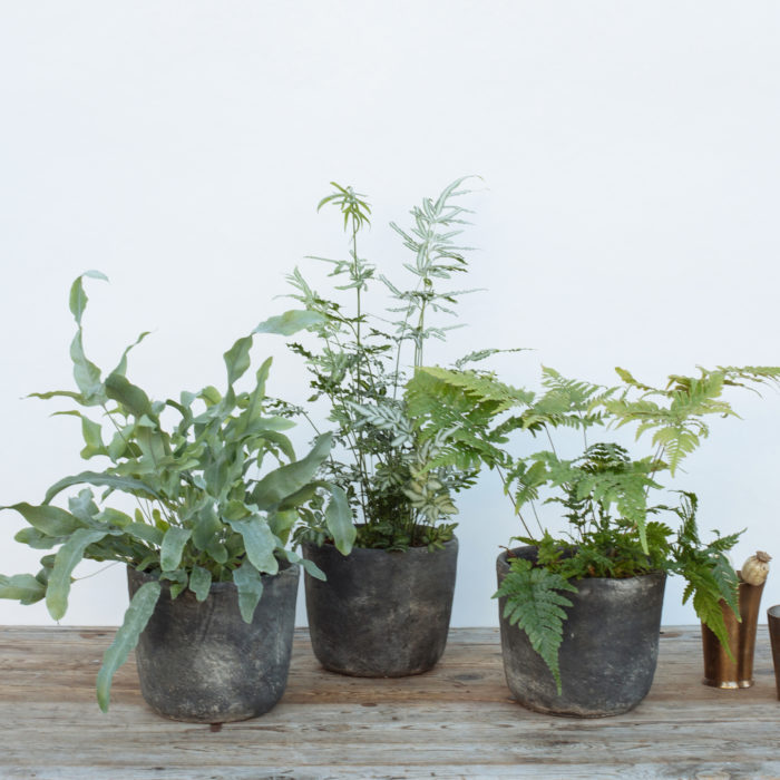 Floom Fresh Flower Co Trio Of Ferns 2