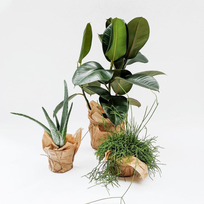 Floom Grace Mary House Plant Trio 1