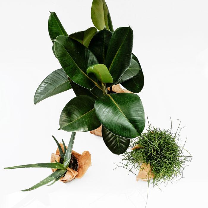 Floom Grace Mary House Plant Trio 2