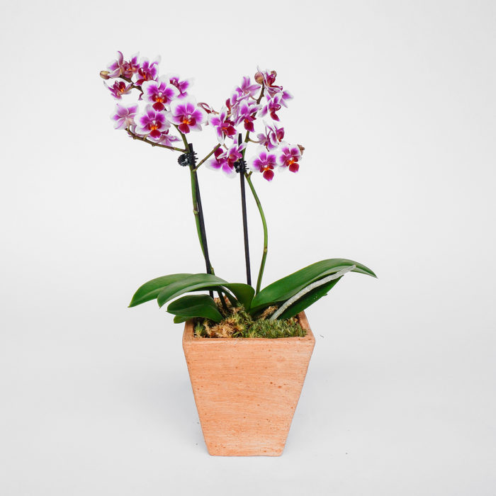 Floom Emfd Orchid 1
