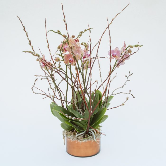 Floom Kw Flowers Wang Wei Orchid 1