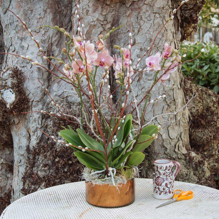 Floom Kw Flowers Wang Wei Orchid 2