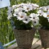 FlowerPower White