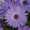 Compact FlowerPower Blue