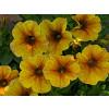 Beautical Caramel Yellow