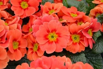 Orange Red