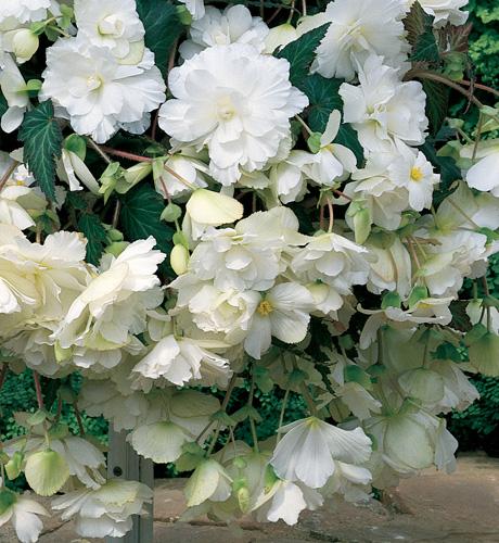 Fountain White