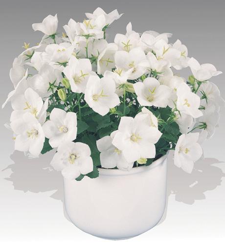 Pearl White