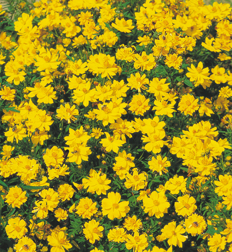 Cosmic Yellow