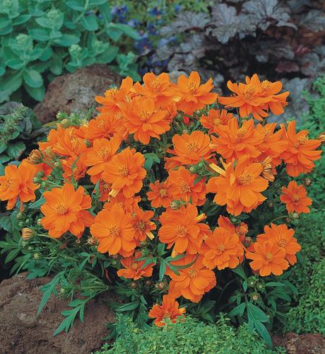 Cosmic Orange