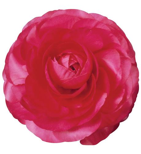 Bloomingdale Rose