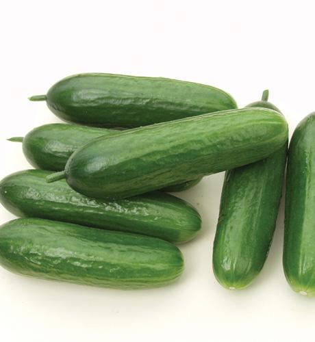 Cucumber Rocky