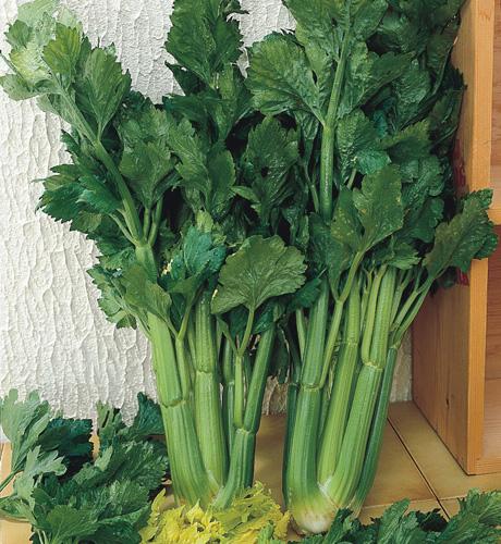 Bush Celery