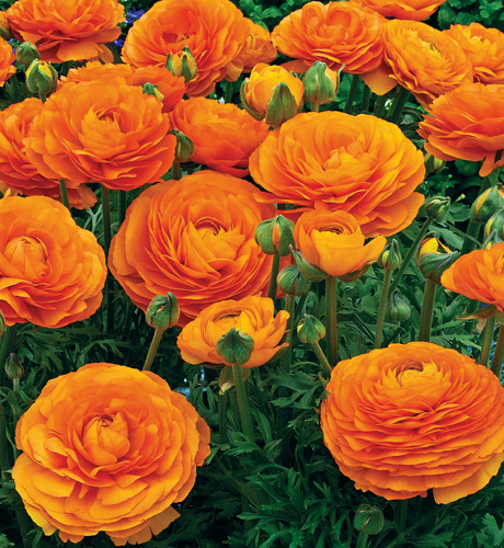 Maché Orange