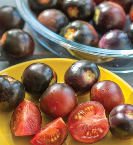 Cherry Pearl
