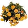 Begonia tuberosa Illumination Apricot