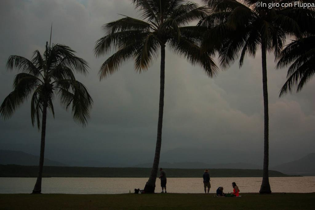 Port Douglas, palme