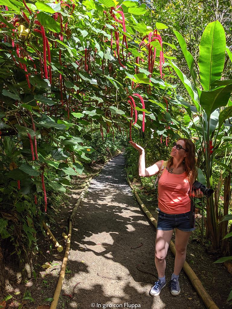 Cosa fare a Santa Lucia, Caraibi: Diamond Botanical Gardens