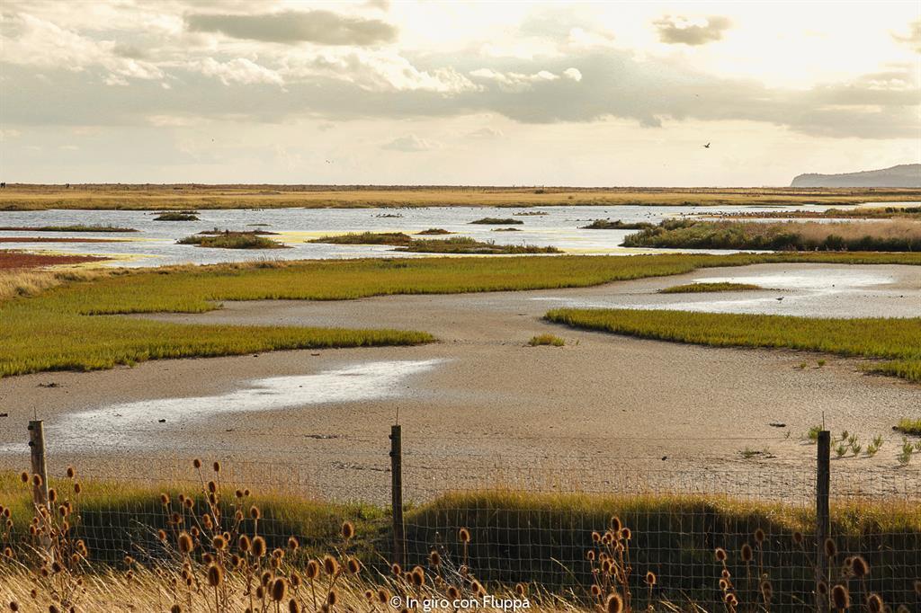 Cosa vedere a Rye in un giorno: Rye Harbour Nature Reserve
