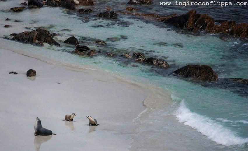 sealbay