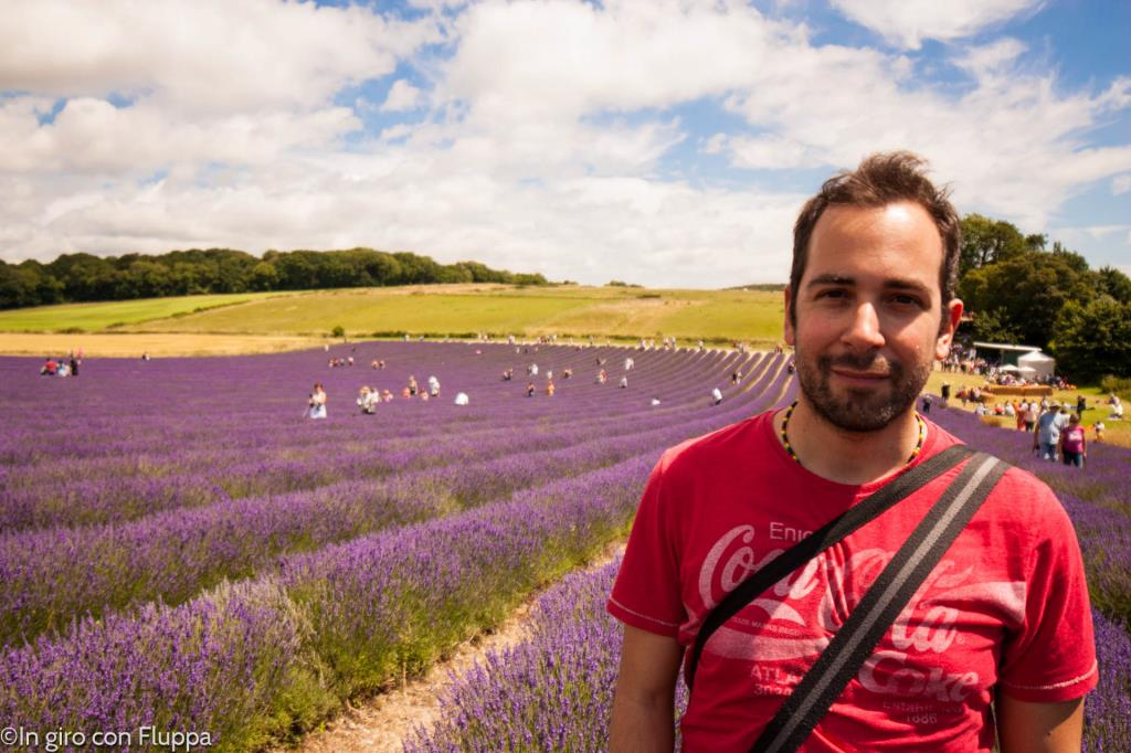 Lordington lavender field