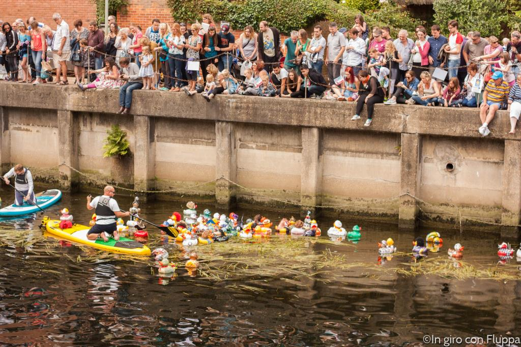 Norwich - duck race