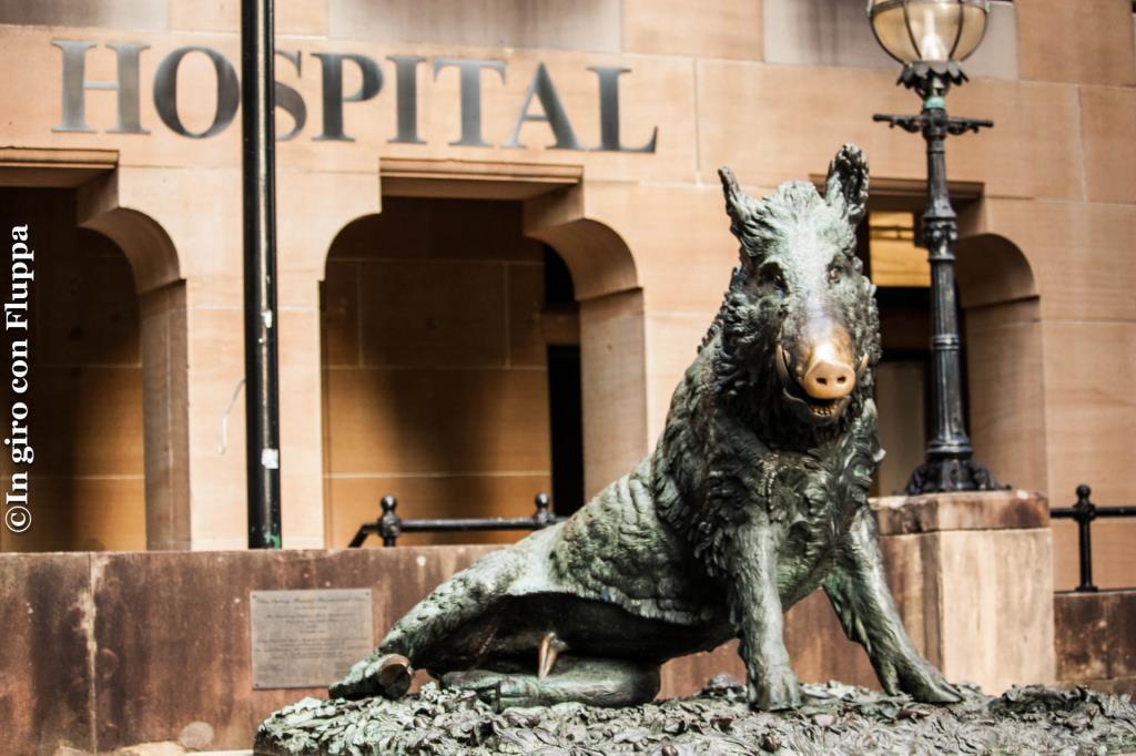 Il porcellino - Sydney Hospital
