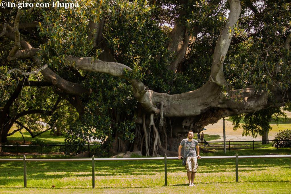 Royal Botanic Gardens, marito usato come unita' di misura XD