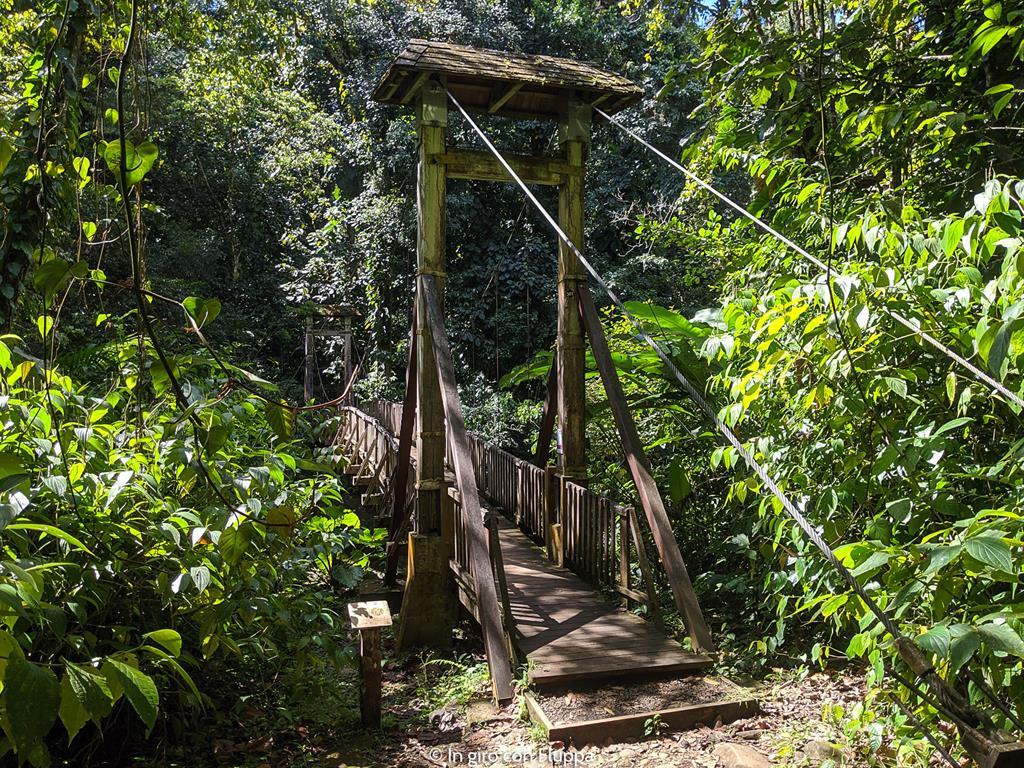 Guadalupa: Maison de la Forêt