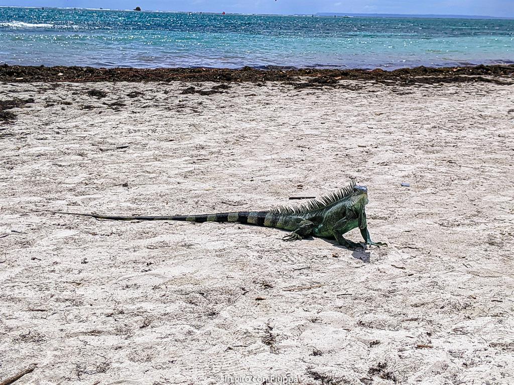 Guadalupa: Pointe de la Saline