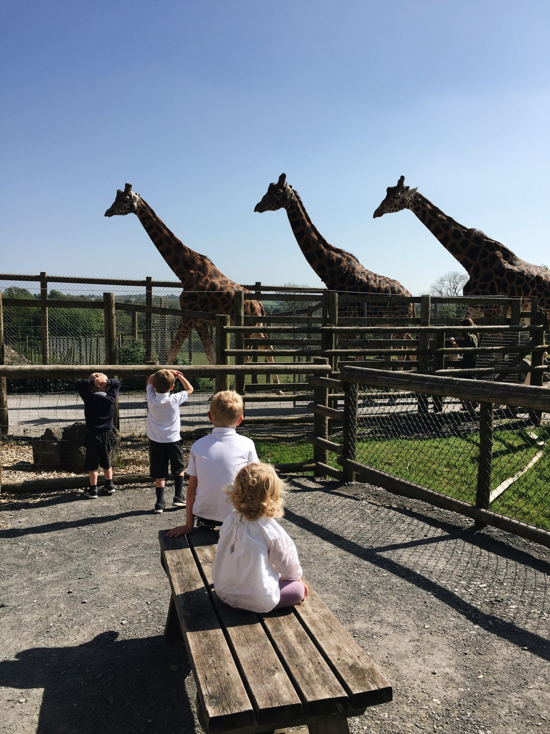 Children watching giraffes at Folly Farm