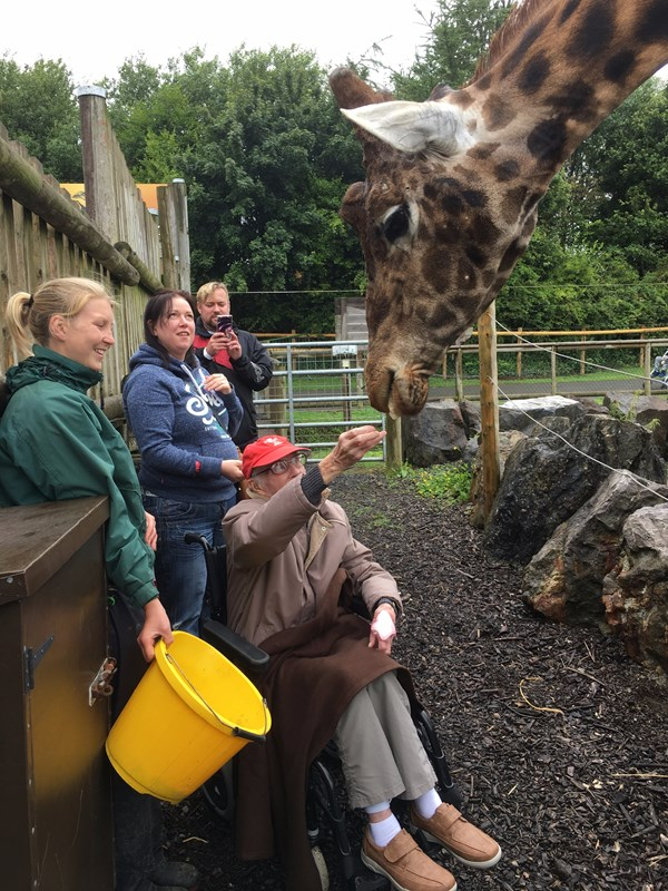 laurence cook feeds the giraffes
