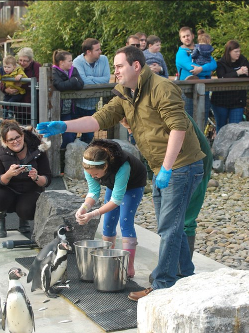 Man and child feeding penguins