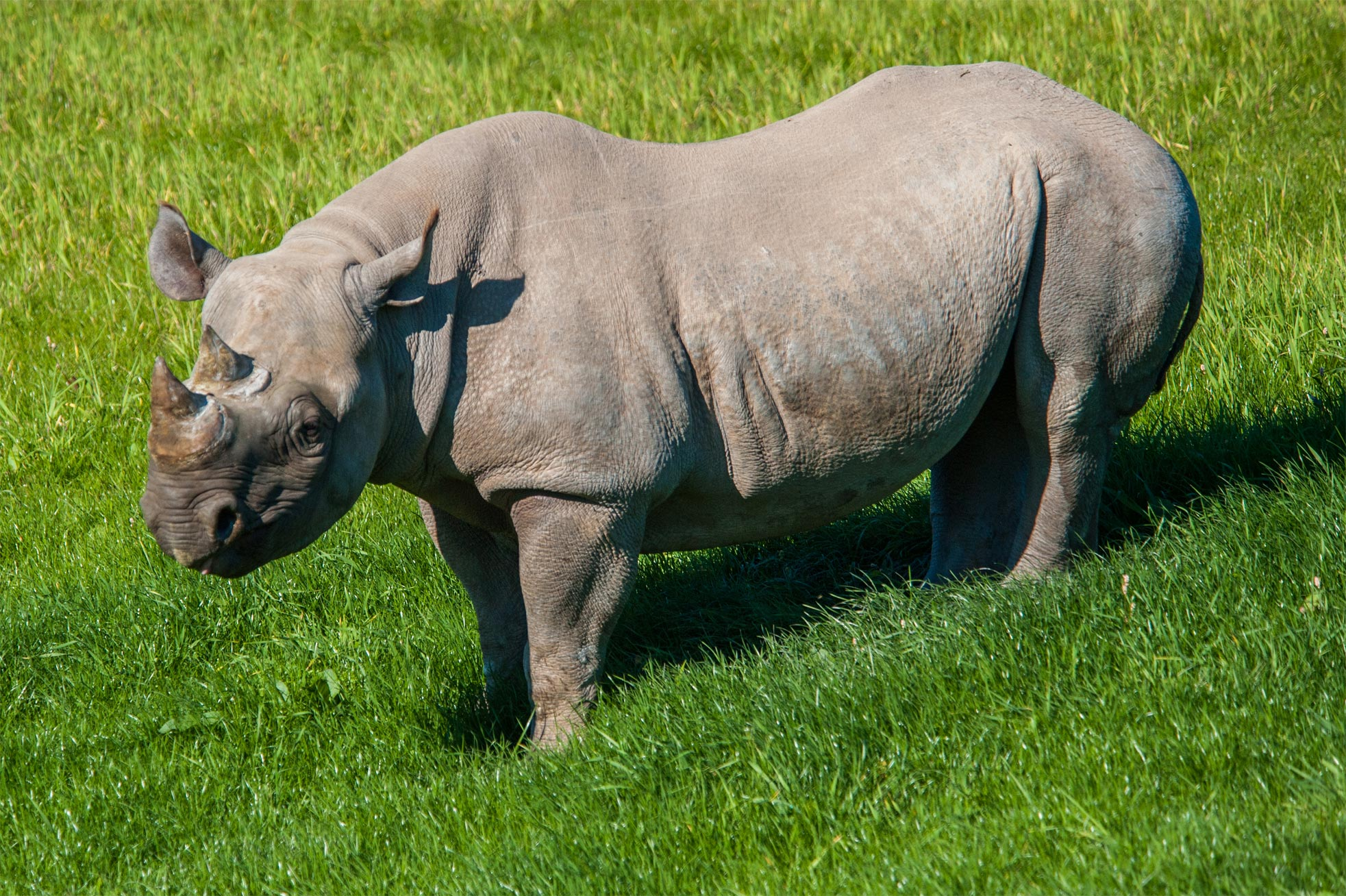Rhino outside