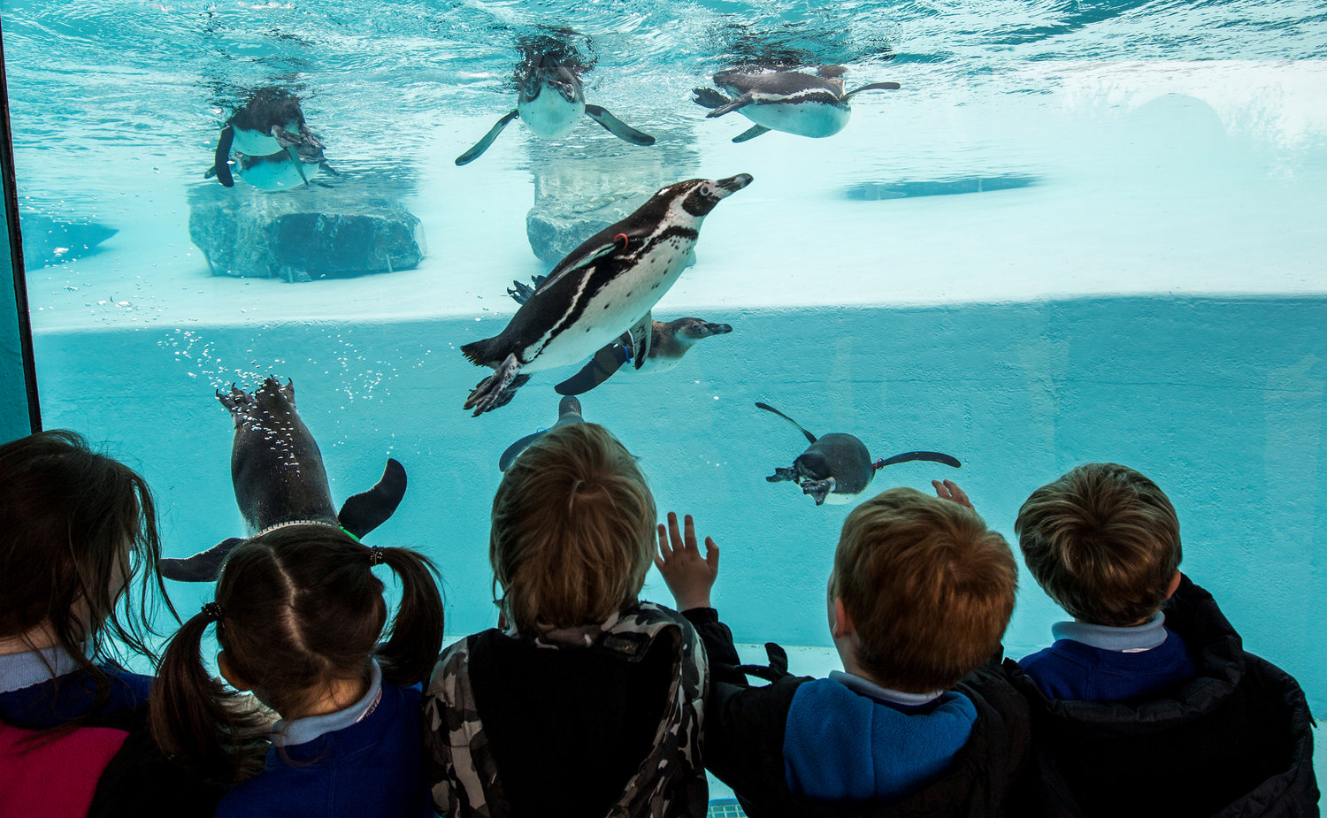 Penguin viewing on a school trip