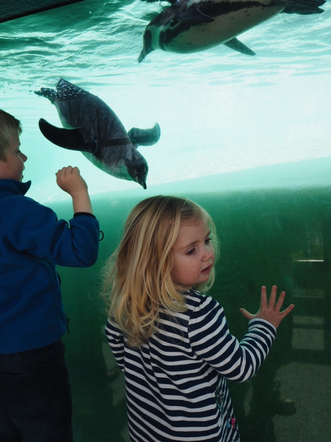 Children watching penguins swim underwater