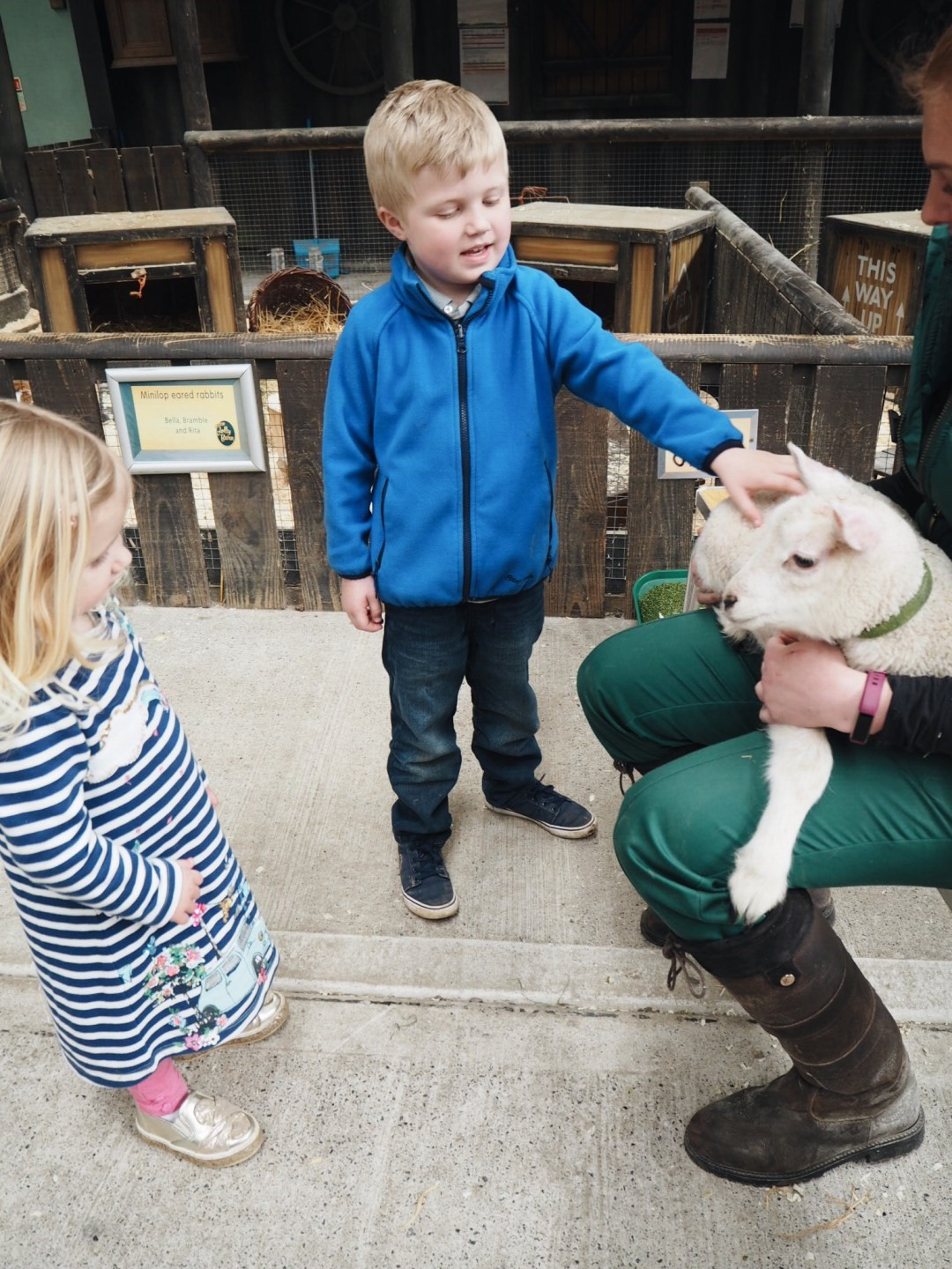 Boy meeting newborn lamb in the Jolly Barn