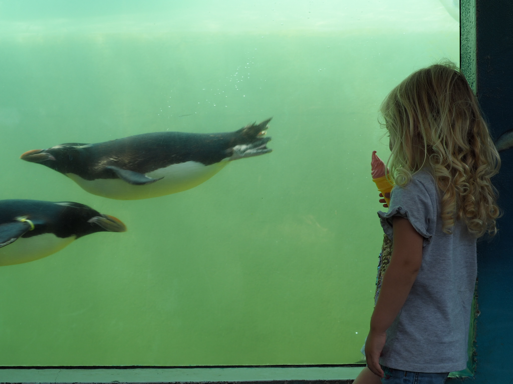 Little Miss Tiggy watchign the penguins swimming at the underwater viewing gallery