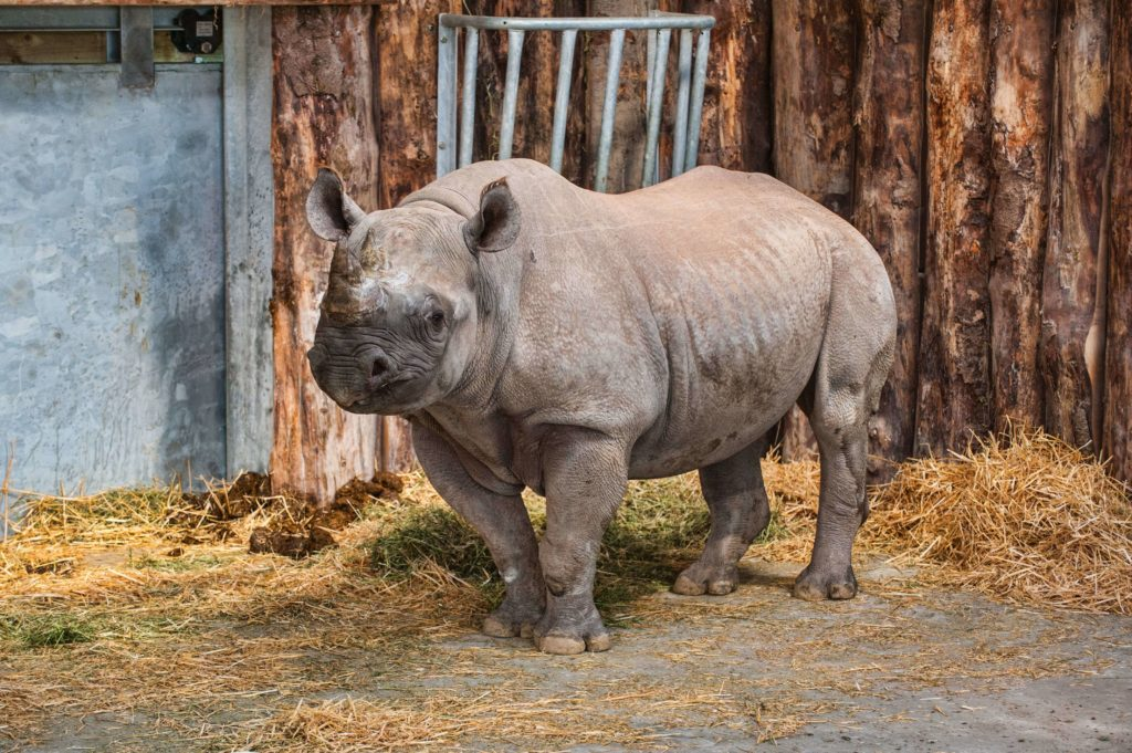 Adopt a rhino at Folly Farm