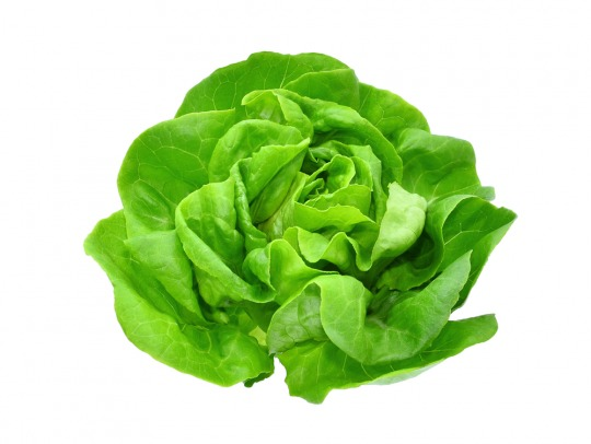 lettuce Kalorien-Nährwerte