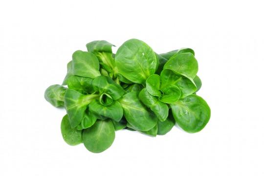 lamb's lettuce Kalorien-Nährwerte